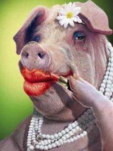lipstick-on-a-pig-225x300